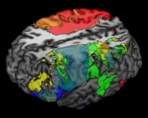 painted-brain