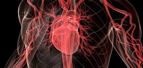 brain-heart