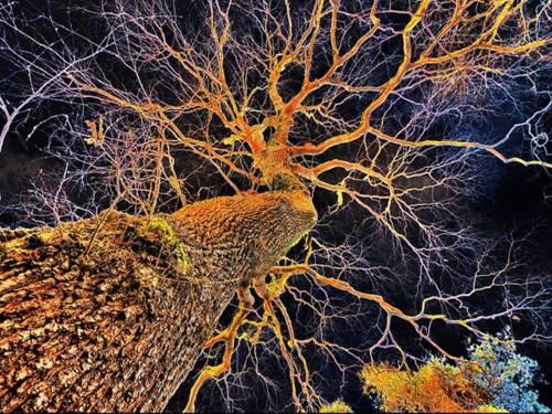 A Tree Neuron