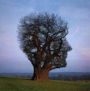 brain tree head