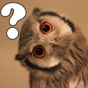 owl-question