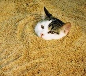 kitty_litter_hazardous_waste