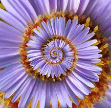 a recursive spiral