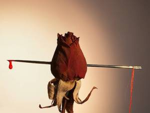 A Rose with Needle