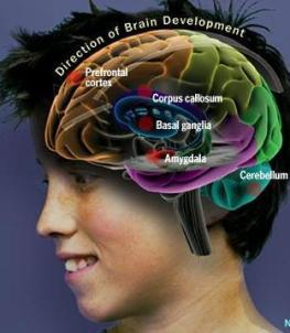 brain teen