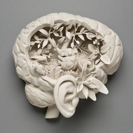 koala-brain.jpg