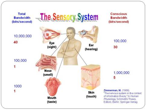 senory-system-information-theory-99-unconscious