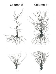 A Impoverished Neurons