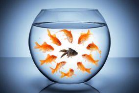 A Racist Fish.jpg