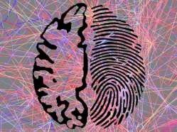 A brain fingerprint