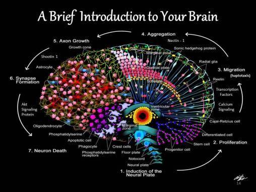 Divine Beautiful Brain