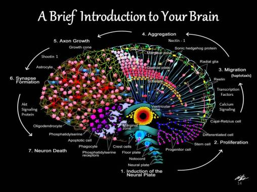 Divine Beautiful Brain